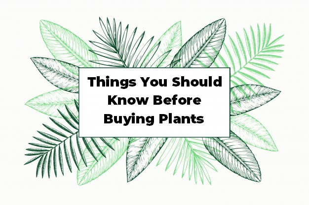 Things You Should Know Before Buying Plants